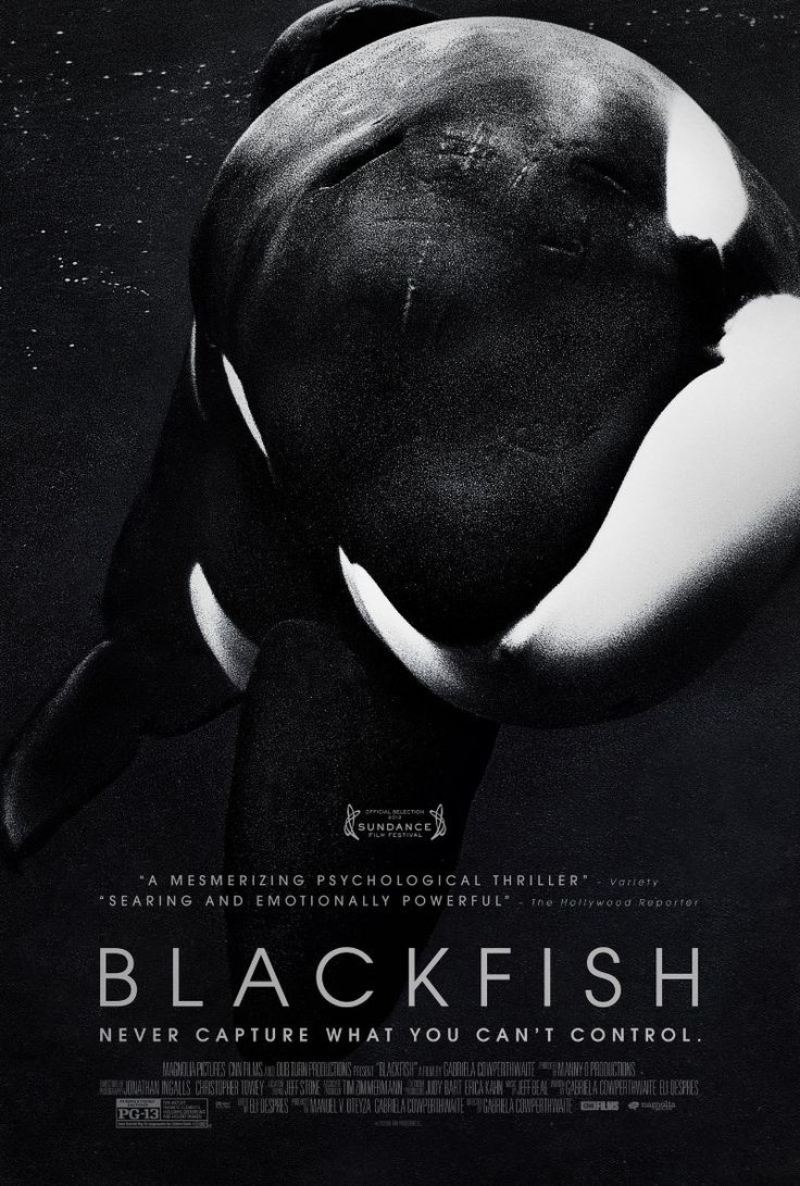 A documentary following the controversial captivity of killer whales, and its dangers for both humans and whales.