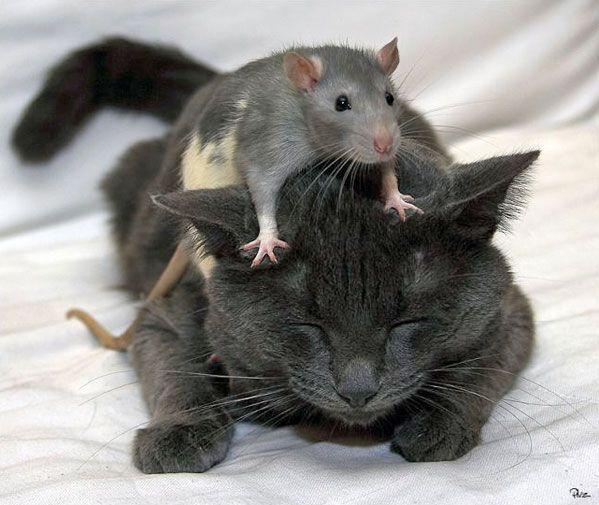 Wahre Freunde