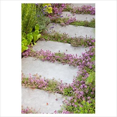 Love the idea of planting creeping thyme between flagstones so the smell wafts up as you walk over it...