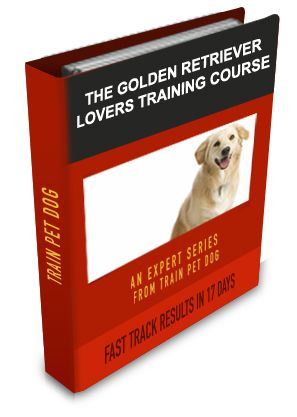 Golden Retriever Training: Learn All About Training Golden Retrievers & Taking Care of Them