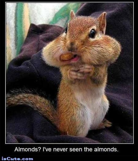 CouponWand.com may not have squirrel food, but we certainly have almonds!  Log on and grab your coupon before those almost disappear!  Coupons change every few days, do log on often.