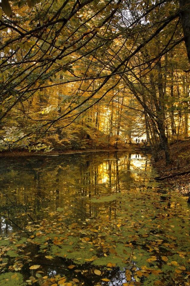 Hidden paradise in autumn.  Seven Lakes National Park, Bolu/TURKEY. Saklı cennette sonbahar. Yedigöller Milli Parkı, Bolu. http://fotogaleri.ntvmsnbc.com/sakli-cennette-sonbahar.html?position=0