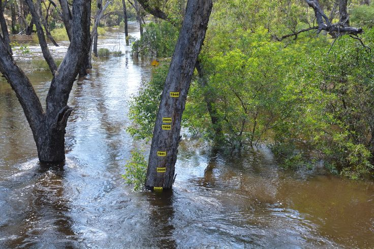 The new flood tree, 25 January 2016. The old flood tree was washed away in an Act of Irony. #nannup #flood #naturallynannup