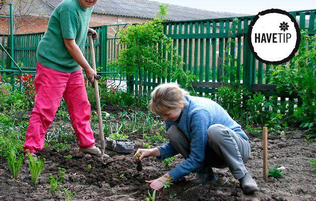 Få liv i køkkenhaven til foråret ved at gøre en indsats i efteråret. Foto: Bigstock