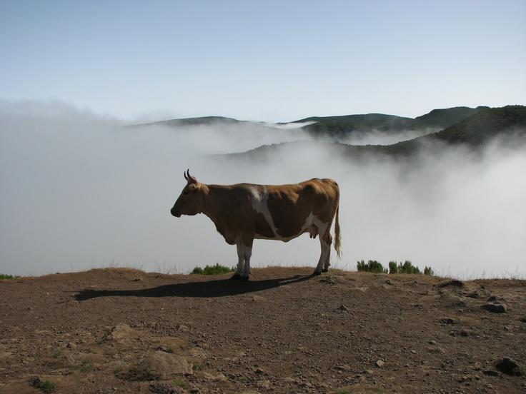Paul da serra ; Madeira ; Portugal ;