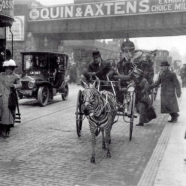 Zebra and carriage ride anyone? London, late 19th/early 20th century