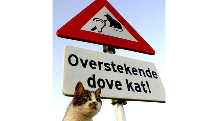 Grappige verkeersborden - Wijkopenautos.nl