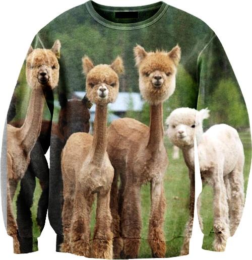 Best 25 Baby Llama Ideas On Pinterest: Best 25+ Shaved Alpaca Ideas On Pinterest