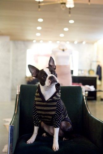Chicago's cutest shop dogs. Can't. Deal. Too. Cute. Photo by Heather Talbert