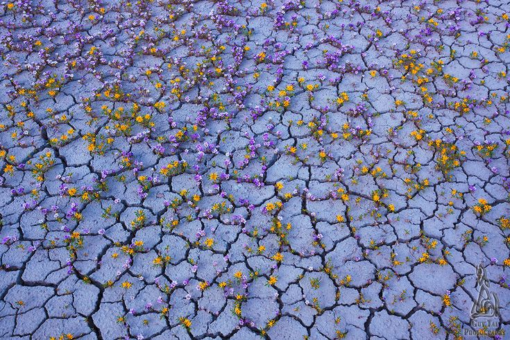 Good Badlands: Dry Terrain of the American West Captured in a Brief Moment of Color by Guy Tal