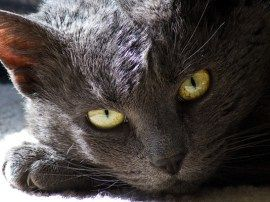 Seizures in Cats: Symptoms and Treatments