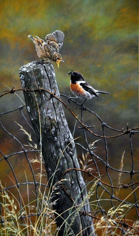 stone chat by alan m hunt