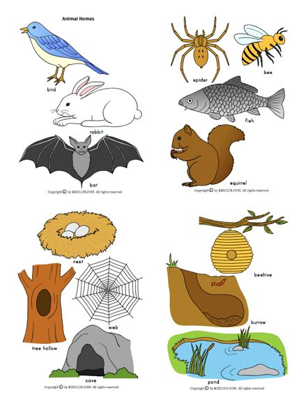 Here's a large set of pictures of animals and their homes. Good for sorting, in a center activity, or on an anchor chart or bulletin board.