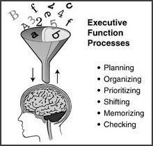 The Executive Function and School Performance (executive-function-model)