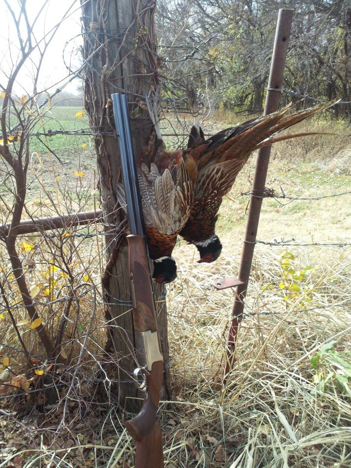 Browning Citori 625 Over and Under 12 Gauge Shotgun and Ring-neck Pheasants