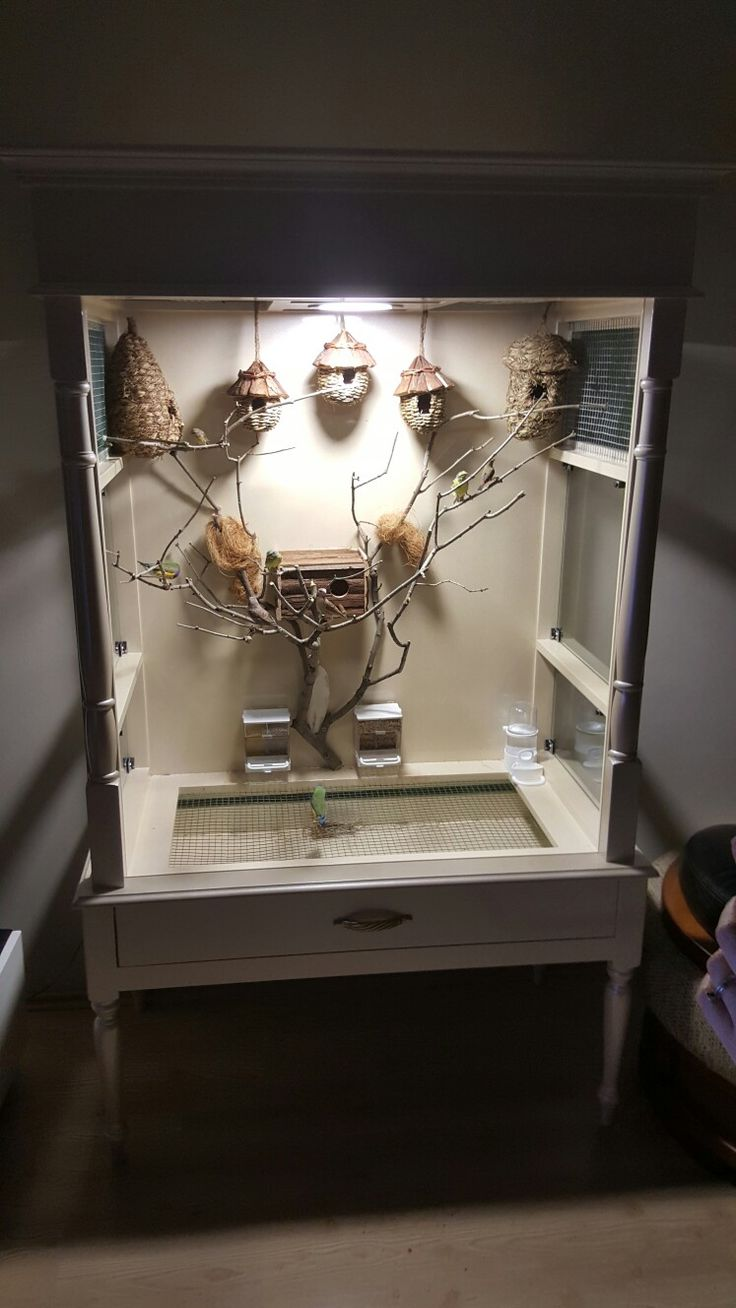 My indoor aviary                                                       …