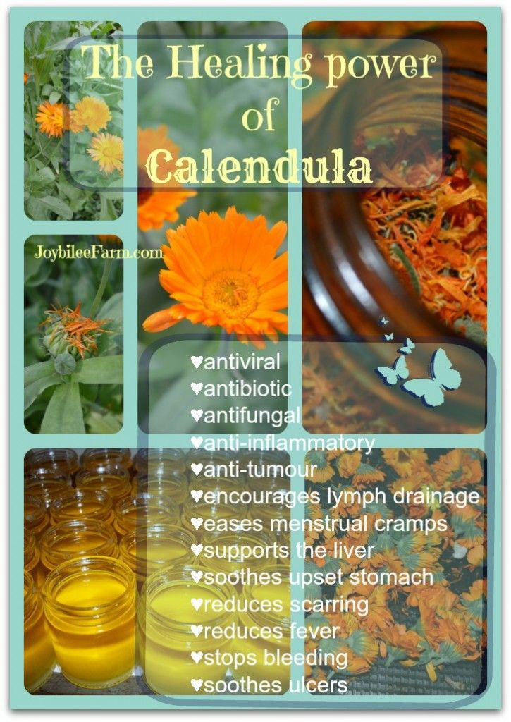 calendula healing power