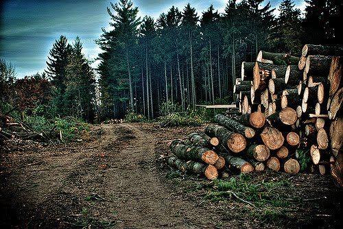 Gambar Kerusakan Hutan Sebutkan 5 Akibat Penggundulan Hutan Deforestation Deforestation Facts Forest Ecosystem