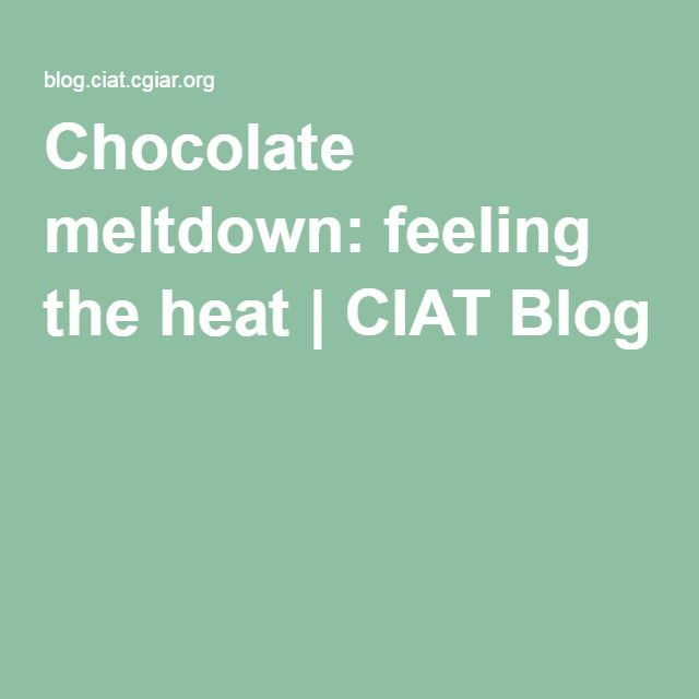 Chocolate meltdown: feeling the heat | CIAT Blog