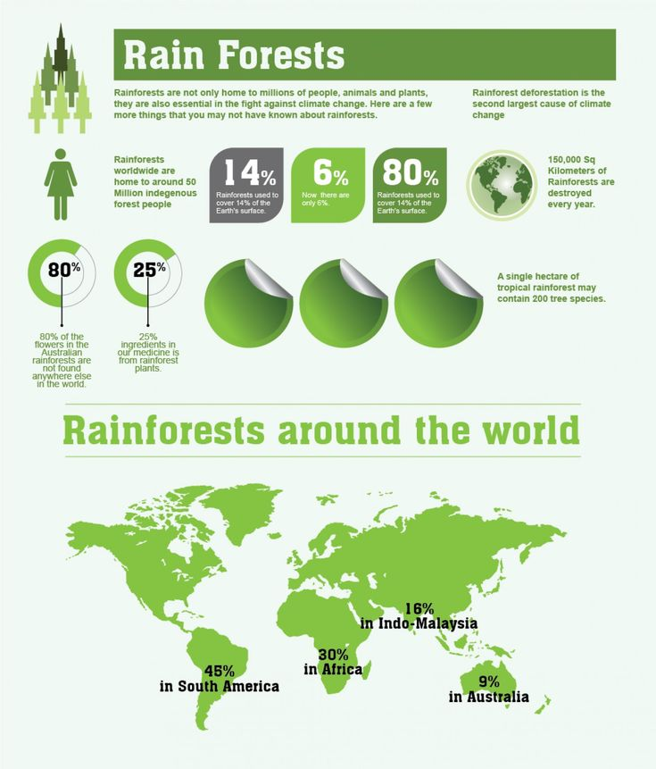 37 best secondary geography images on pinterest geography amazing rainforests facts and figures infographic fandeluxe Choice Image