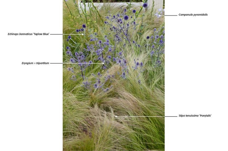 48 Best Drought Tolerant Plants Images On Pinterest Landscaping And