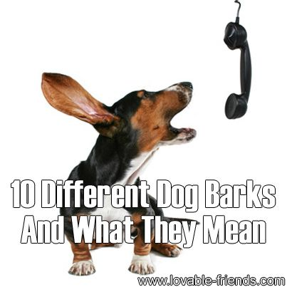 "❤ Do you know how to ""translate"" the various types of dog bark? This is really interesting ❤"