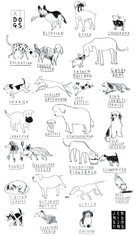 Dogs Tea Towel by Jenni Desmond. A humorous, stylish and original tea towel featuring an A-Z of dogs (and the X as a crossed-out cat)! £7.50. Available from the Paintings in Hospitals gift shop from 03/09/2015.