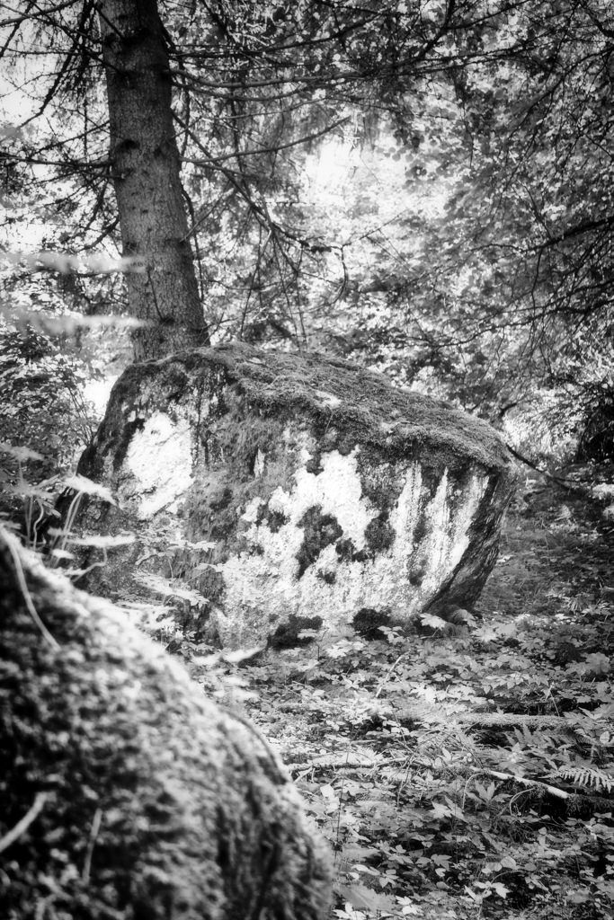 bwstock.photography  //  #rock #tree