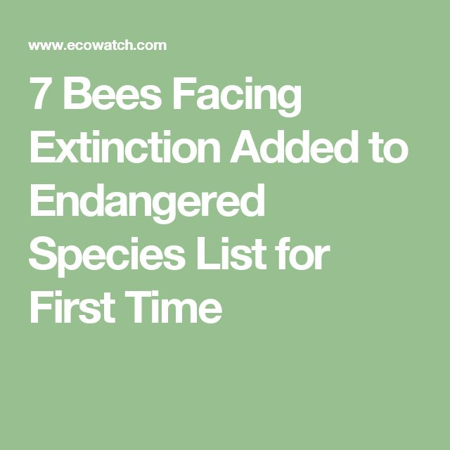 7 Bees Facing Extinction Added to Endangered Species List for First Time