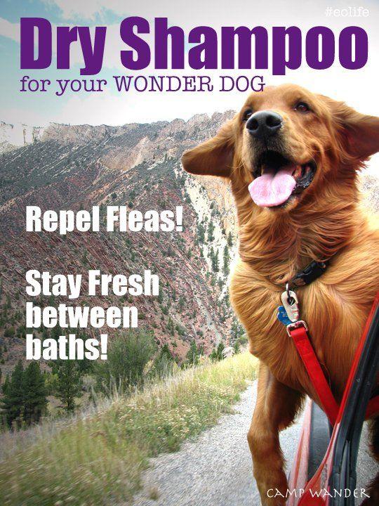 EASY!  Dry Shampoo for Dogs! Clean, Fresh & Flea Free!