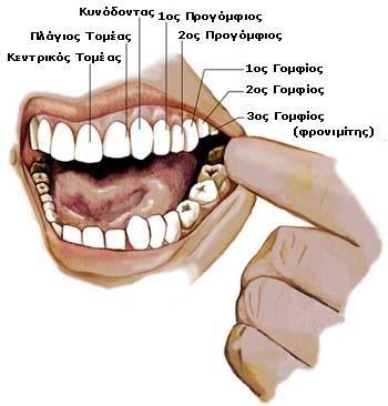 Χαρούμενο Δημοτικό: Δόνα Τερηδόνα (τα κόμικς μας και το βιβλίο) και Υγεία των Δοντιών μας!
