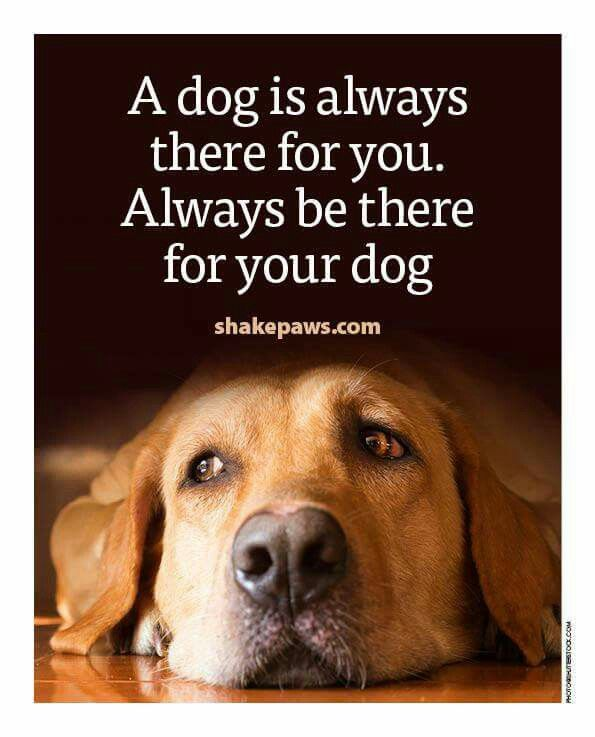 A dog is always there for you. Always be there for your dog. <3