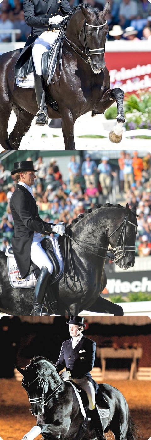 Totilas, el caballo más caro del mundo. Totilas, the most expensive horse in the world. https://www.facebook.com/dearenaysal
