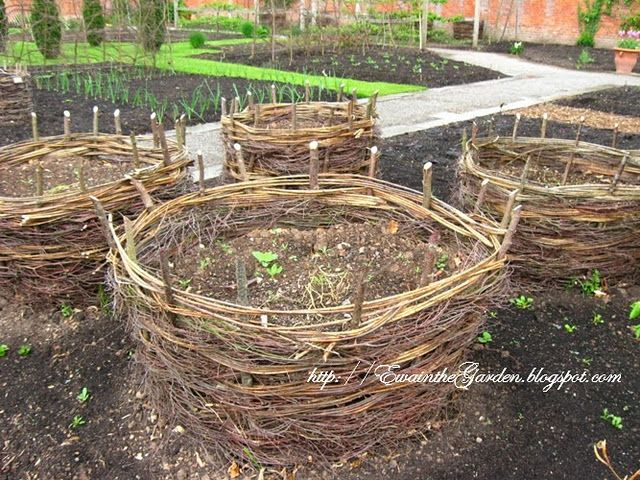 Potato baskets made of twigs (of which we have aplenty): Woven Baskets, Gardens Ideas, Gardens Beds, Grape Vines, Raised Beds, Rai Gardens, Vegetables Gardens, Growing Potatoes, Rai Beds