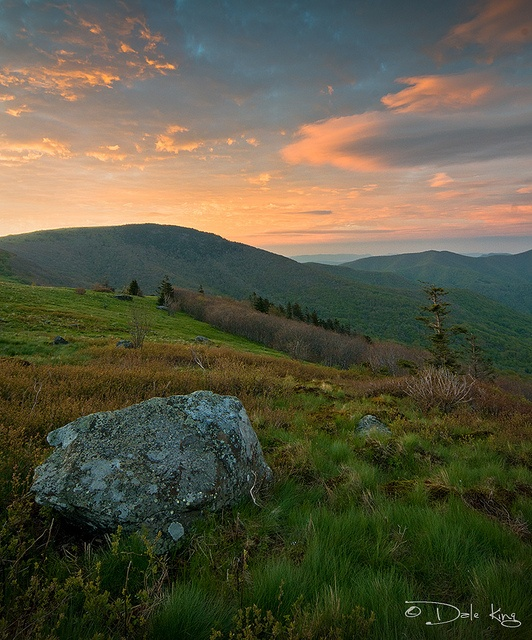 Roan Mountain State Park: 97 Best Roan Mountain Images On Pinterest