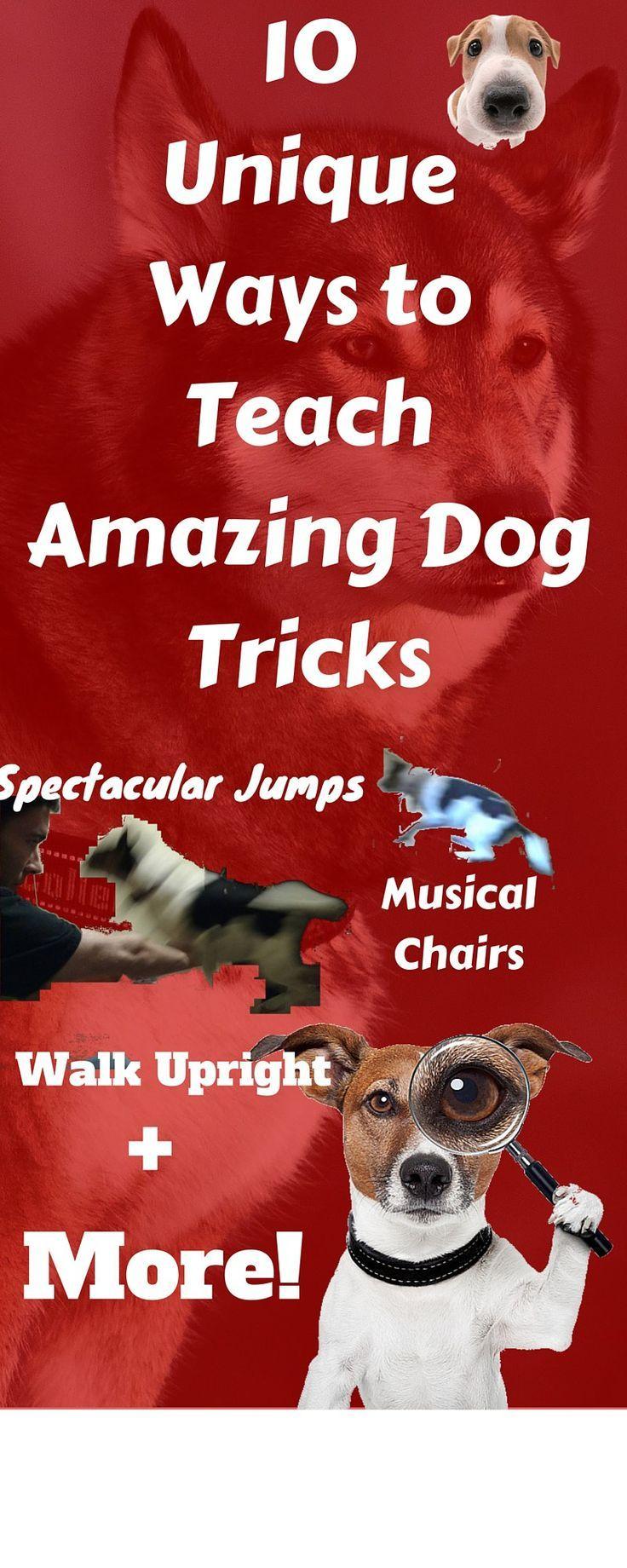 10 Unique Ways to Teach Amazing Dog Tricks | Impressive dog jumps, skateboarding, army crawl & so much more!