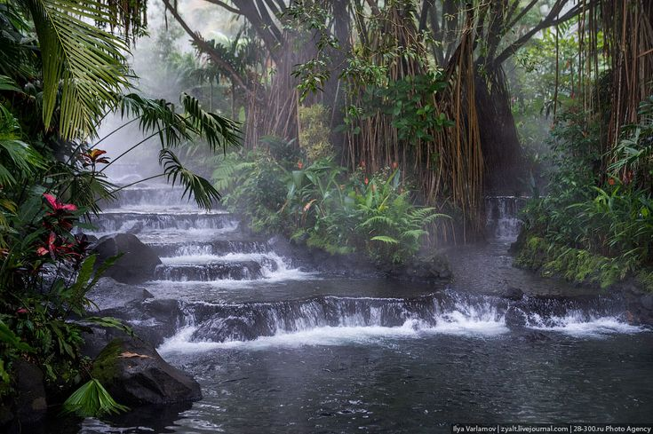 zyalt: Национальный парк Аренал, Коста-Рика