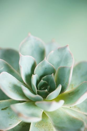 Succulent | More pastel inspiration here: http://mylusciouslife.com/prettiness-luscious-pastel-colours/