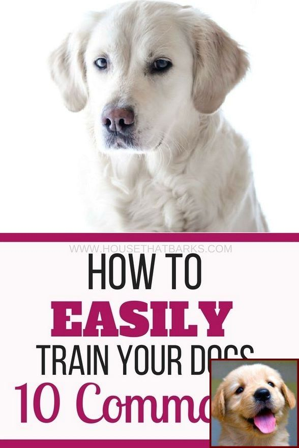 1 Have Dog Behavior Problems Learn About House Training A Gsp