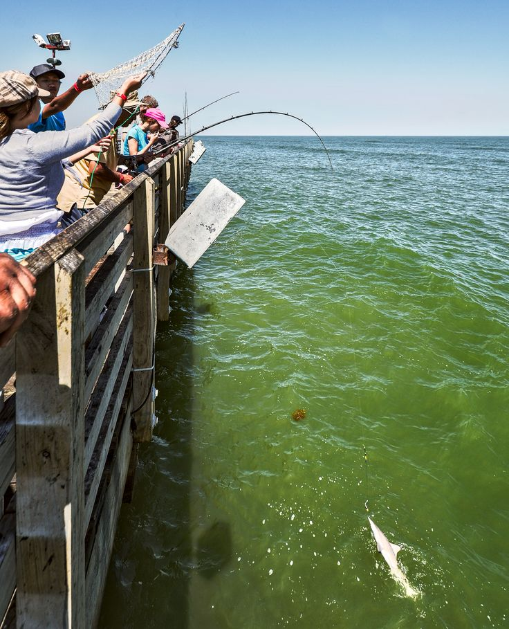17 best galveston island texas images on pinterest for Fishing license in texas