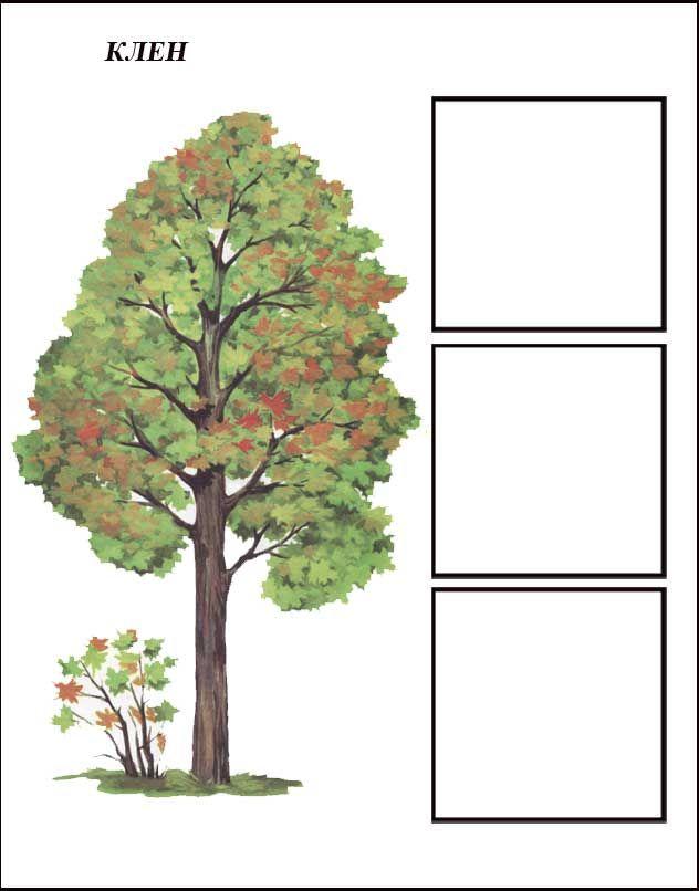igra-derevya-klen-1.jpg (632×806)