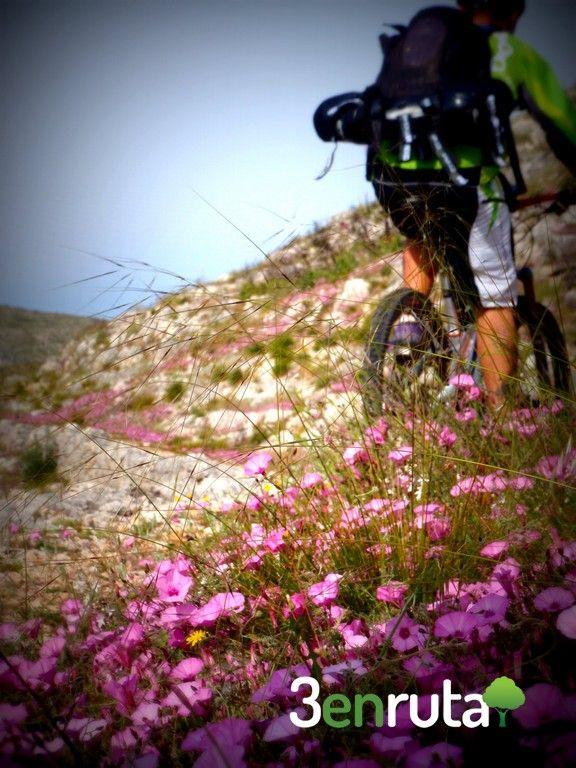 Sender moro d'Ontinyent   Rutas en bicicleta de montaña, de carretera y senderismo