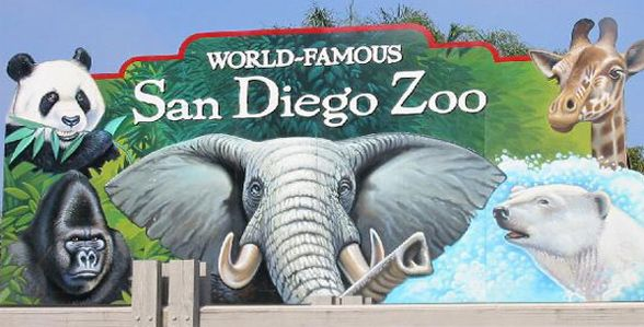 san diego zoo pictures - Bing Images