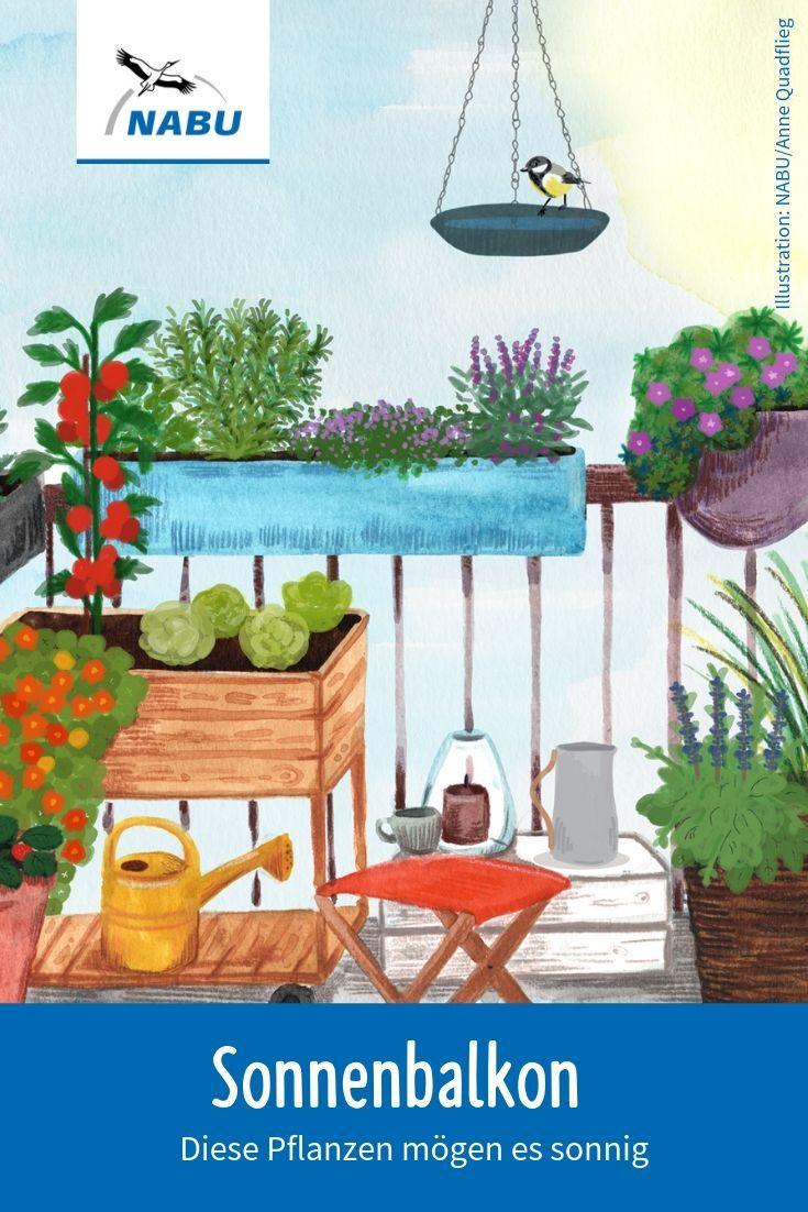 Pflanzen für den Sonnenbalkon   Pflanzen, Kürbis pflanzen, Garten