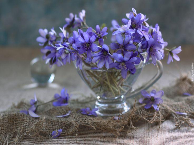 Niebieskie, Kwiatki, Przylaszczki