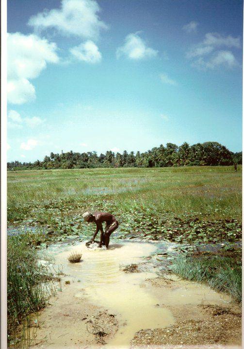 Sri Lanka 1992, lavaggio delle pietre estratte dalla miniera dalle parti di Hikkaduwa