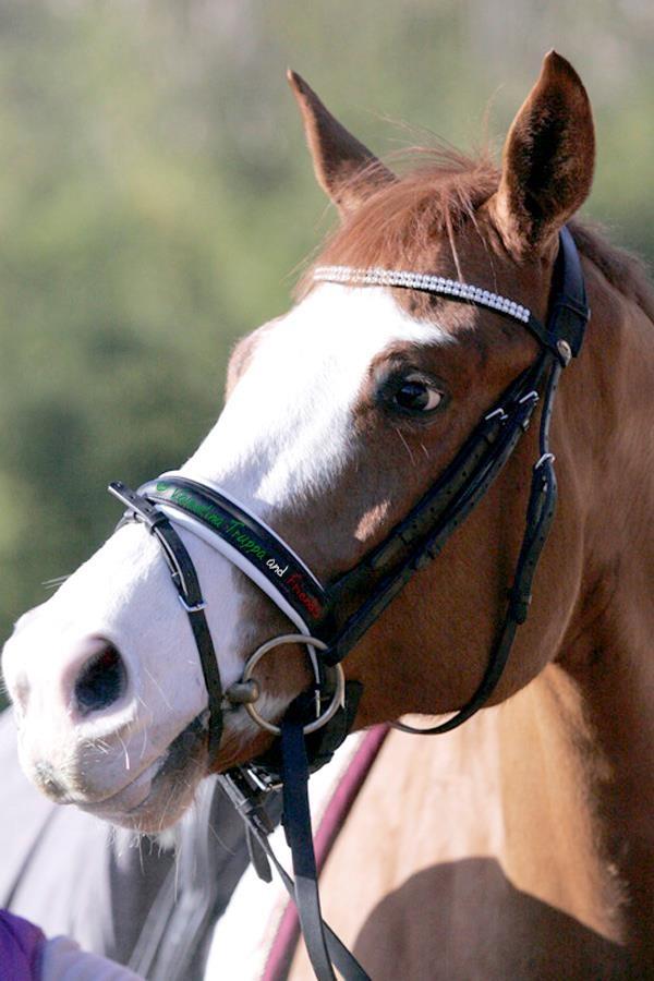 Sauvignon, uno dei giovani cavalli da poco entrati a far parte della scuderia del Carabiniere Valentina Truppa