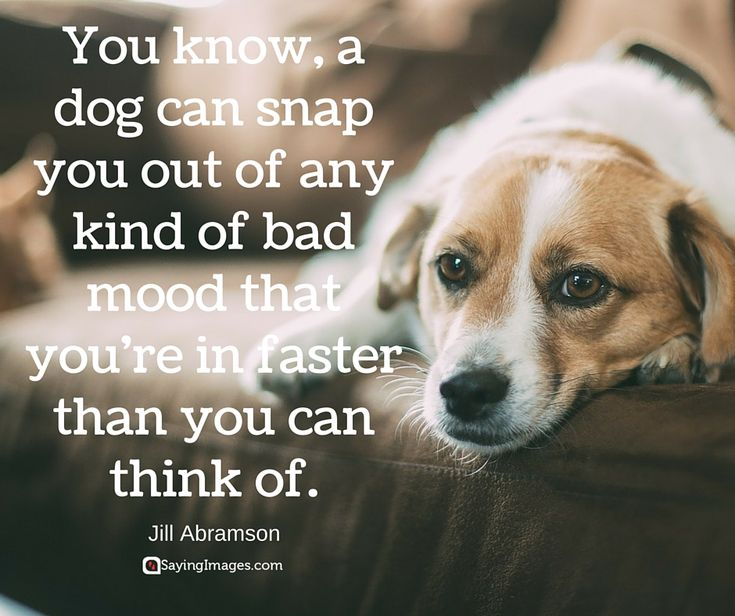 Dog Cats Are Better Than Humans Quotes