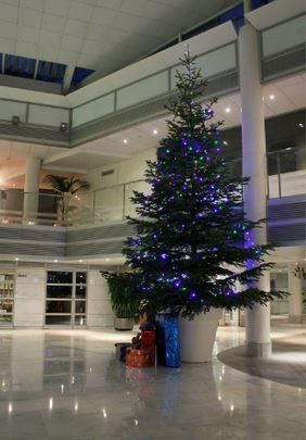 17 best images about amadeus holiday decorations on for Amadeus decoration
