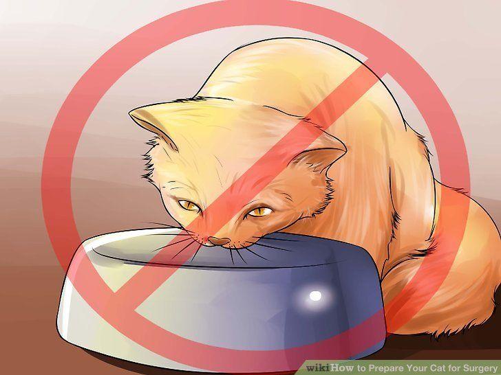 So Bereiten Sie Ihre Katze Auf Die Operation Vor Katzen Mehrere